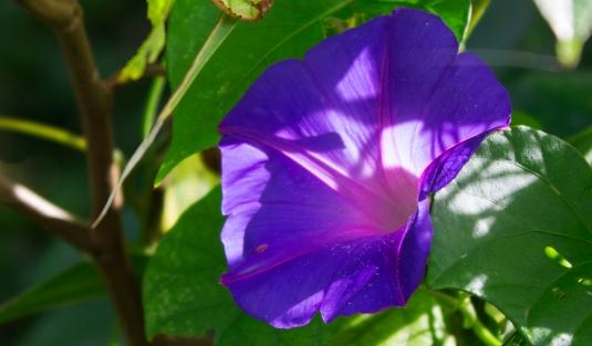 flawed flower